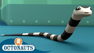 Octonauts - The Bandit Snake | Compilation | Cartoons for Kids