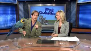 Veterinary Suggestions For Exotic Pet Owners
