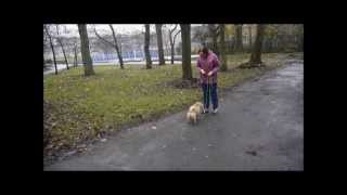 Training A Scared, Reactive Dog