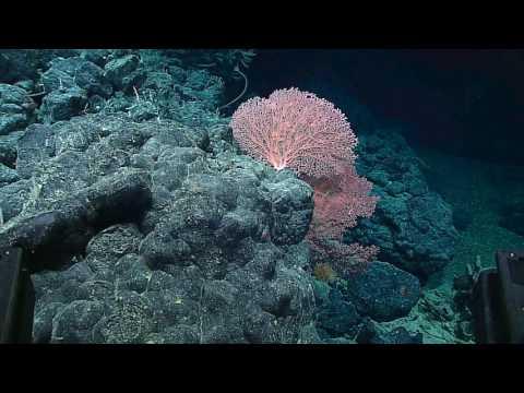 Papahānaumokuākea Marine National Monument: 2016 Hohonu Moana