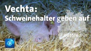 Vechta: Schweinehalter vor dem Aus | tagesthemen mittendrin