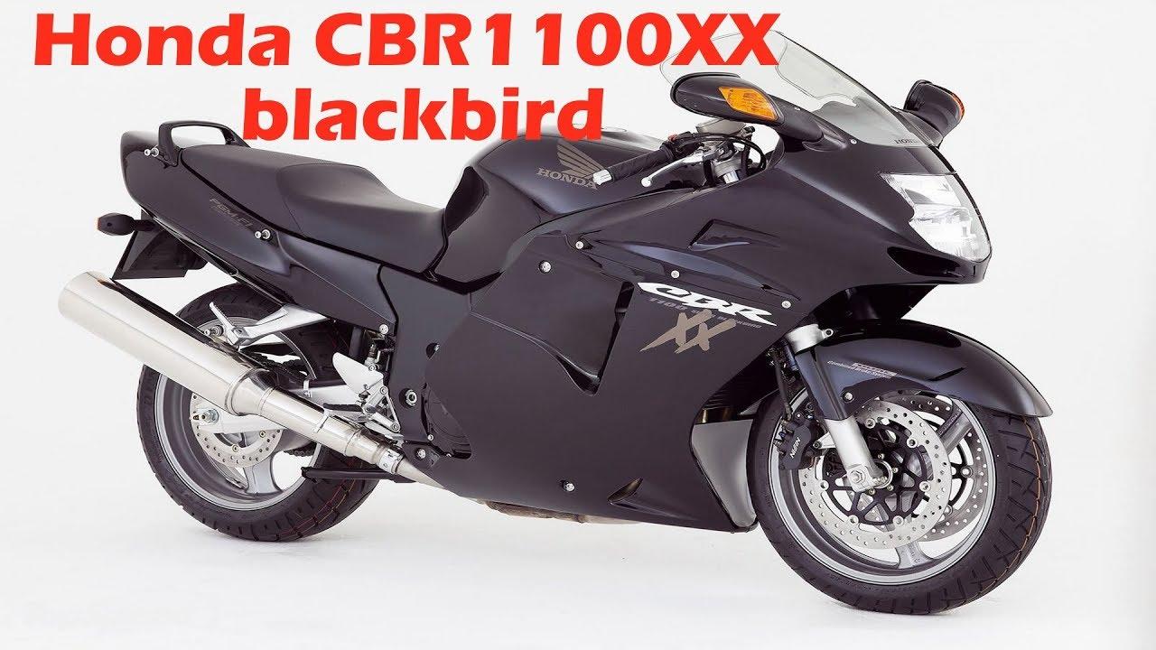 даем дрозда обзор Honda Cbr1100xx Blackbird Youtube