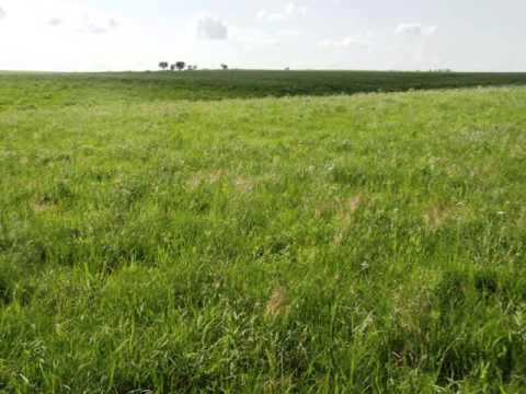 LAND AUCTION:  Friday, August 2, 2013 at 7:00pm (320 Acres ~ Lyon Co ~ Grass & Home)