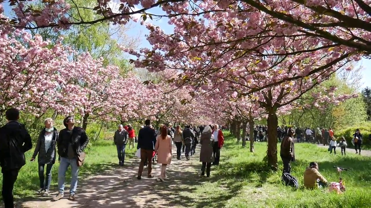 Kirschblütenfest 2017 in Teltow - YouTube