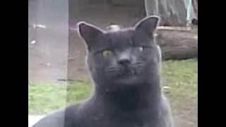 Угарный кот за окном :D (озвучка)