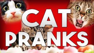 BEST CAT PRANKS
