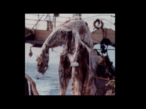 PLESIOSAUR CARCASS CAUGHT IN JAPANESE FISHING NETS | Zuiyo-Maru Globster, 1977