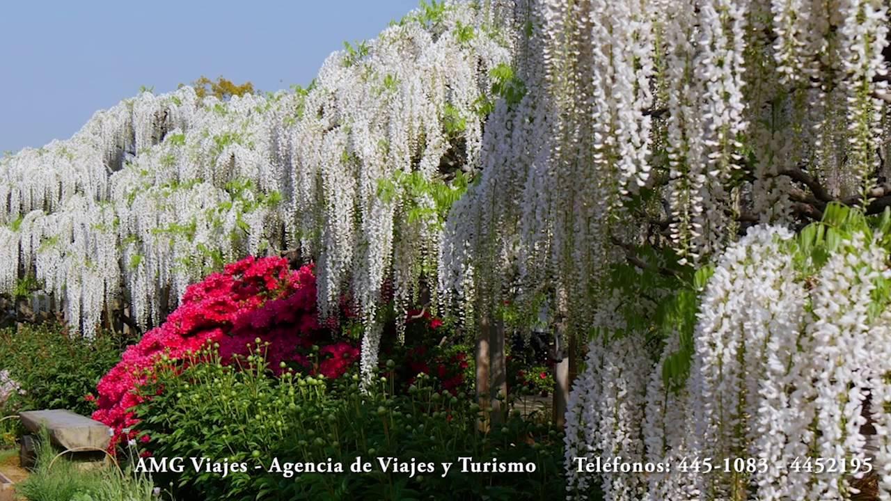 T nel de wisteria el hermoso jard n japon s kawachi fuji for Jardines kawachi fuji