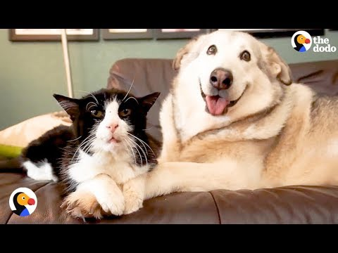 SAD Dog Loses Cat Best Friend, But Gets 4 Foster Kittens To Take Care Of | The Dodo