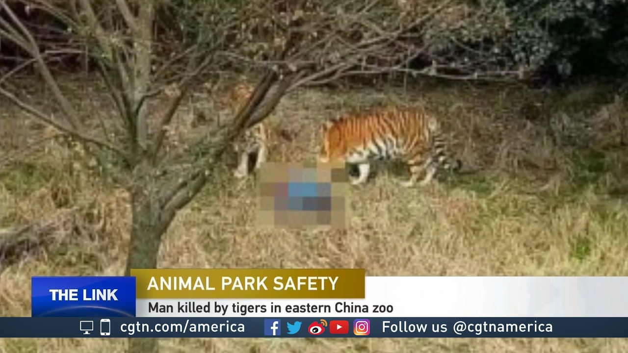 Recent animal attacks at parks and zoos worry many