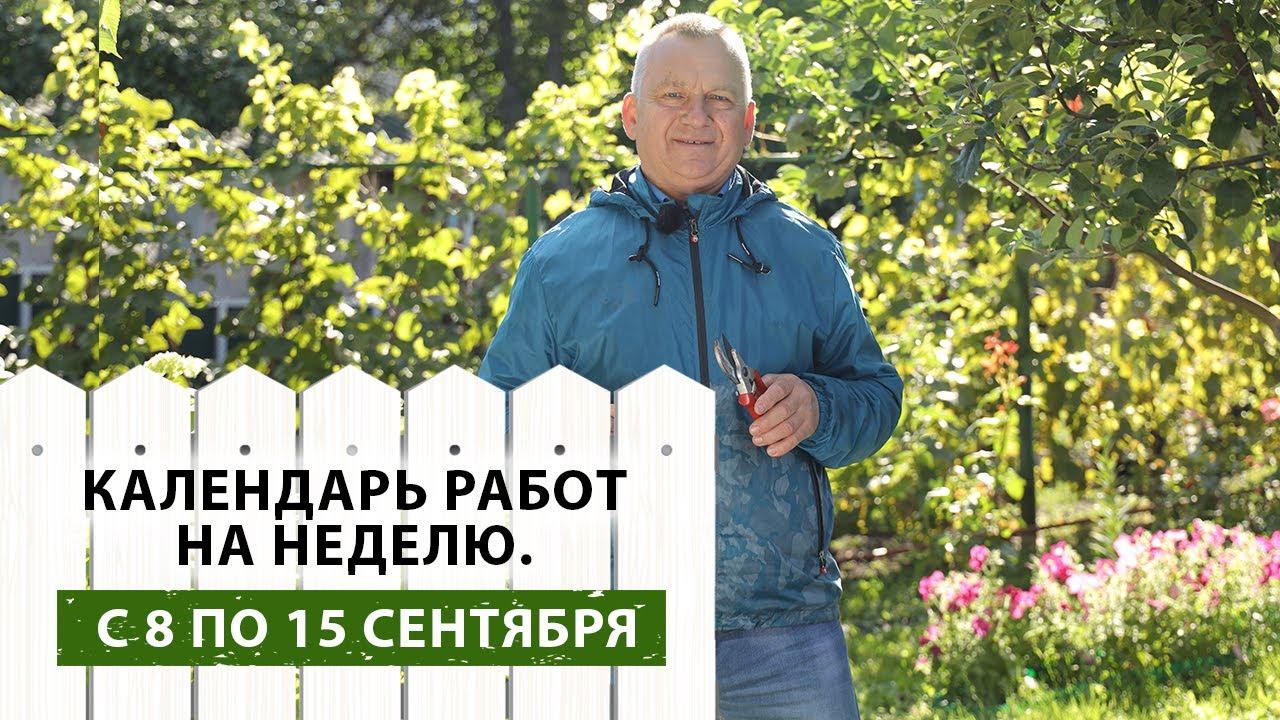 Дачные работы с 8 по 15 сентября. Календарь ВАЖНЫХ дел садовода