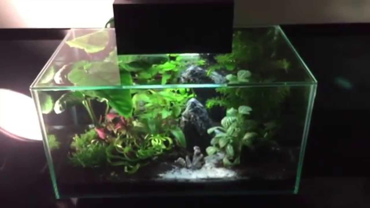 aquarium fluval edge 2 youtube. Black Bedroom Furniture Sets. Home Design Ideas