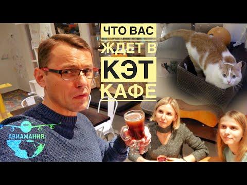 Таллин Эстония   Cat Cafe Nurri   #Авиамания в Кэт кафе