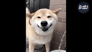TRY NOT TO LAUGH oR SMILE Watching Funny Animals 🔥100% IMPOSSIBLE🔥 If You Laugh You Lose ★49