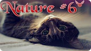 Nature #6  Кошки в замедленной съемке  Животные  Природа  Красивое видео  Animal videos