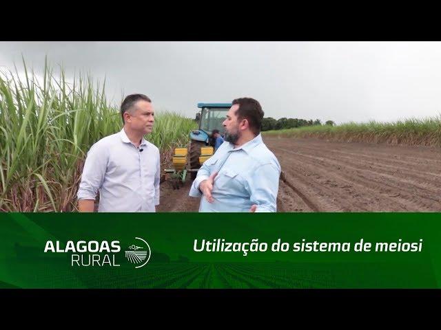 Em 2019 a Usina Caeté apostou no sistema de meiosi para renovar os canaviais