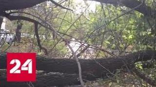 Смотреть видео В Свердловской области ураган оставил без света 8 тысяч человек - Россия 24 онлайн