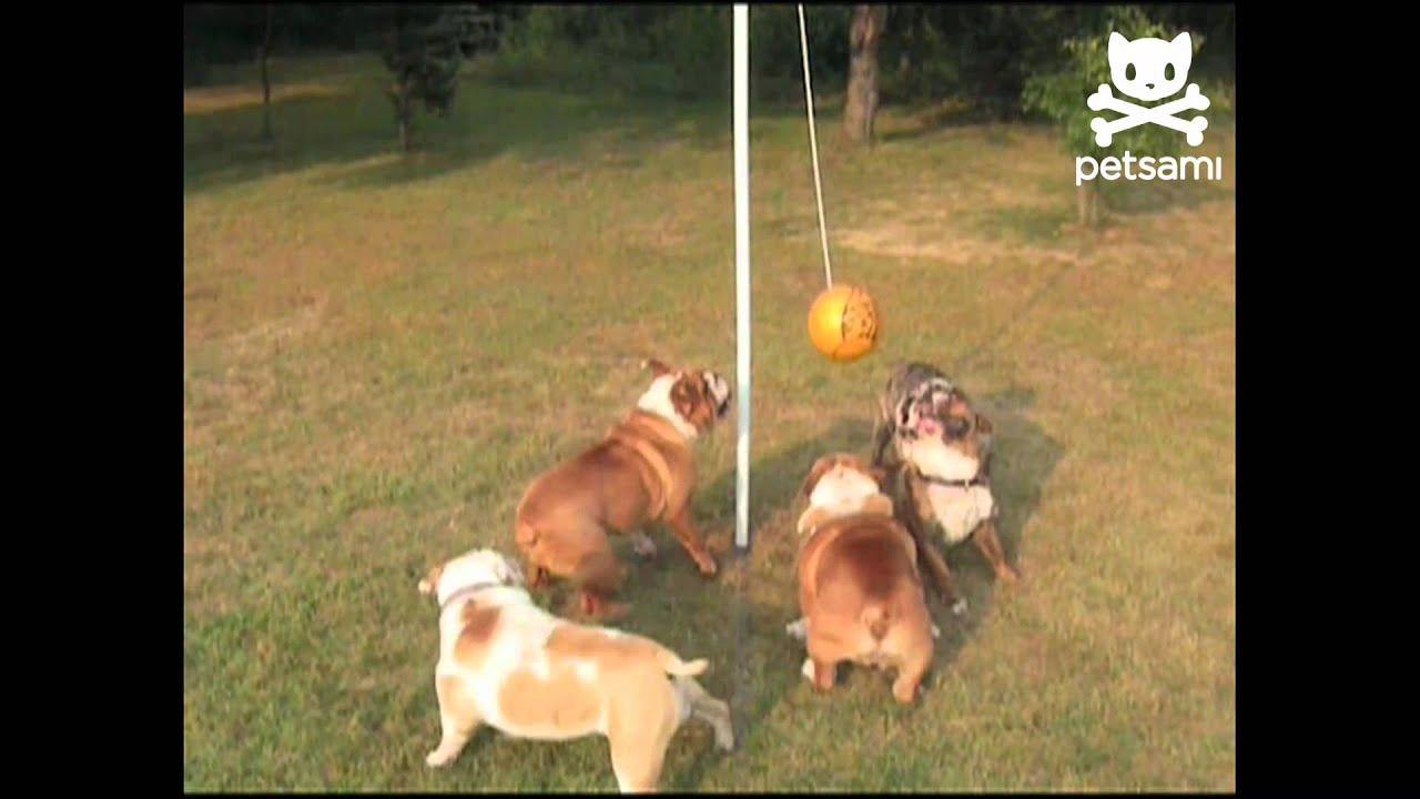 big bulldogs play tether ball youtube