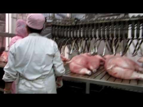 pig slaughter machine