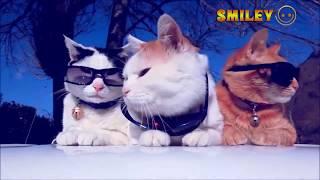 Không thể nhịn cười //Tổng hợp những clip hài hước động vật