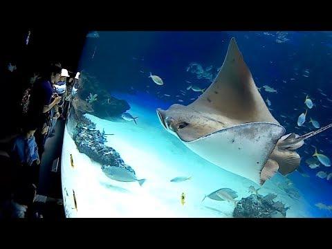 サンシャイン水族館 sunshine aquarium 館内一周 walk around 2017/9/16