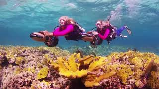 Diving Reefs & Walls in Nassau with Stuart Cove's Dive Bahamas