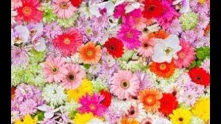 Аптекарский огород - шикарная выставка растений и цветов в Ботаническом саду МГУ