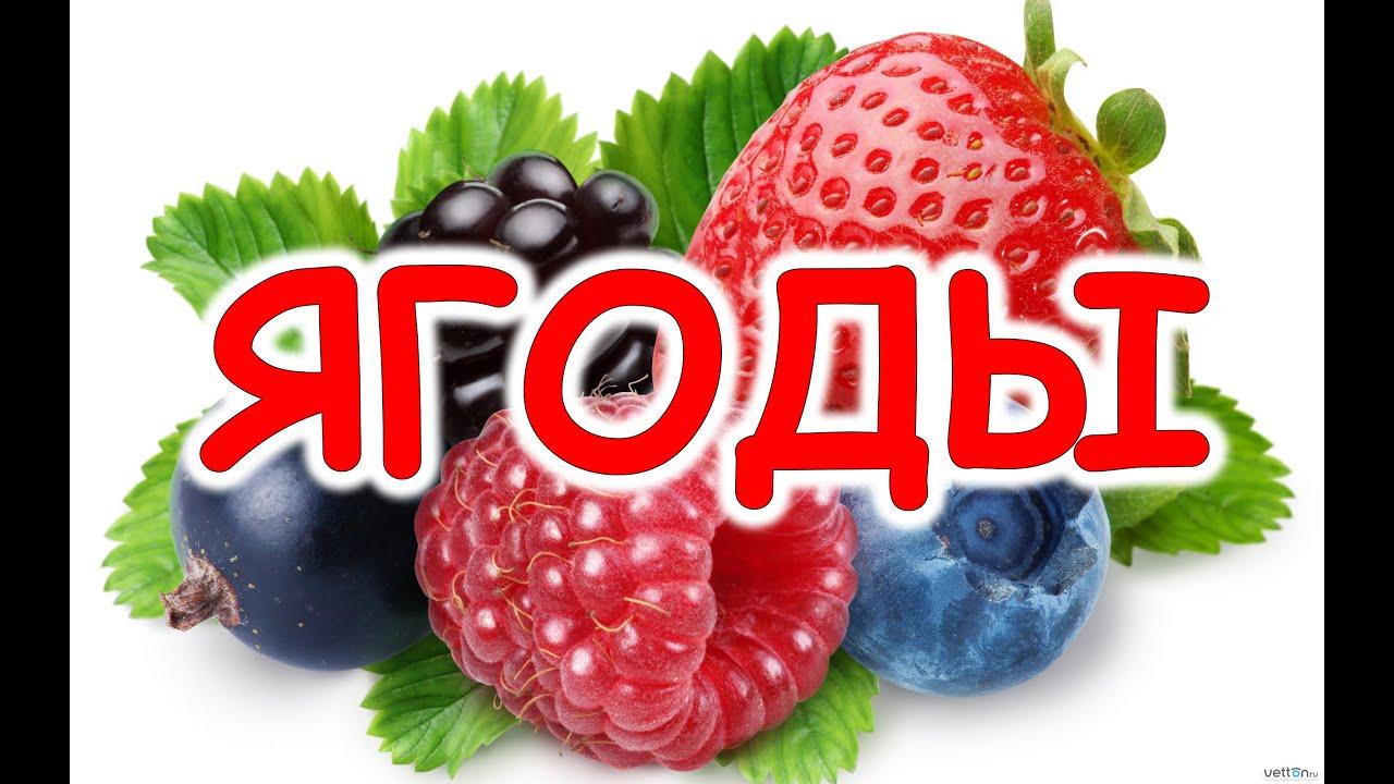 Картинки по запросу учим ягоды