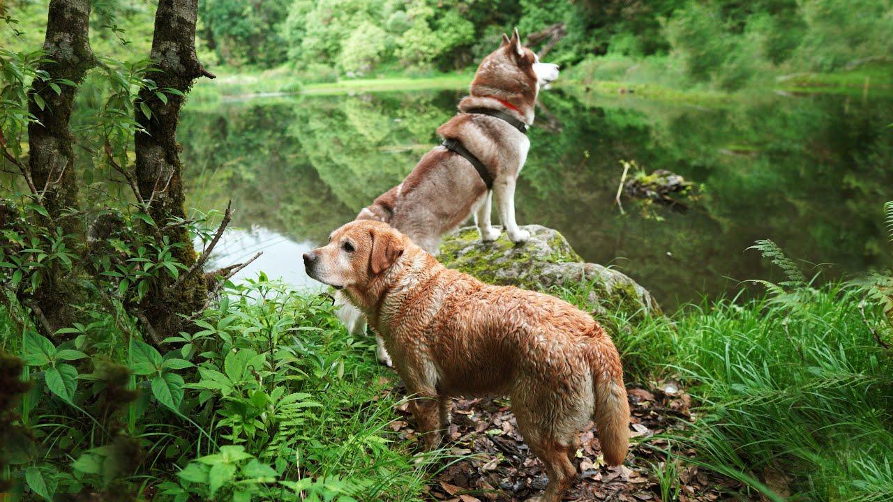 FOUND A BEAUTIFUL LAKE IN HIMALAYAS | REDEMPTION | MUNSIYARI