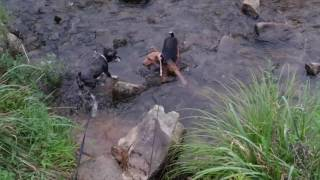 2016.8.7(日) 水遊びが出来て、 自然を満喫できる場所 #鳴滝公園 #ゆい...