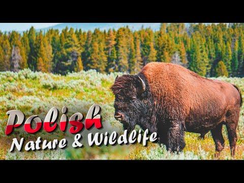 Poland : Nature and Wildlife