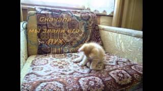 Начало истории про котенка Персика