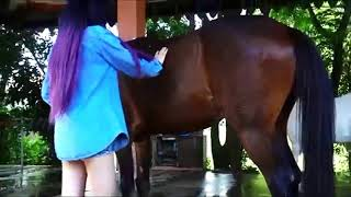 A woman's special relationship with a big black horse. WOW! Wash and Care
