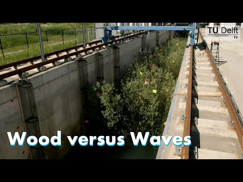 Wood Versus Waves