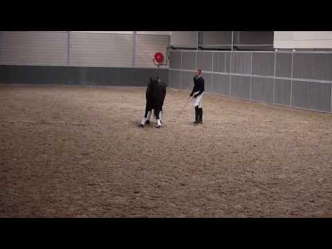 Demonstration Will Rogers 25th May 2013 Elite Horsemen Clinic