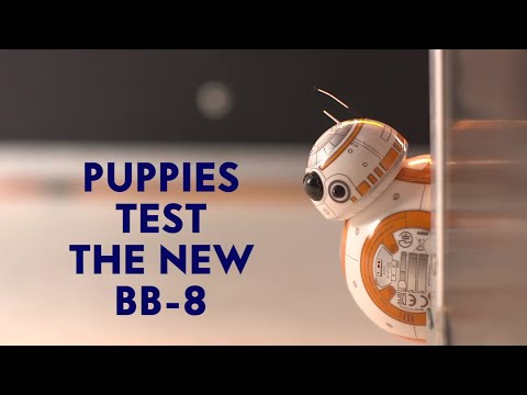 Puppies VS New Star Wars BB-8 Droid Toy: Who's More Adorable?