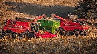 3 kombajny Case w kukurydzy| 5xCase | 2x Claas| Interkas