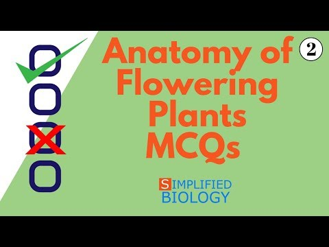 ANATOMY OF FLOWERING PLANTS MCQs 2 for NEET, AIIMS, AIPMT, JIPMER, PREMED
