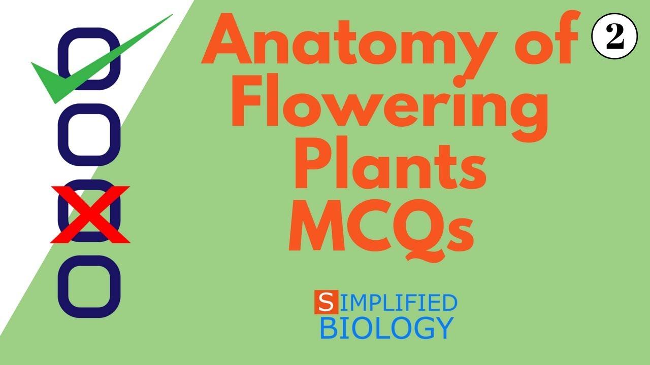 ANATOMY OF FLOWERING PLANTS MCQs 2 for NEET, AIIMS, AIPMT, JIPMER, PREMED