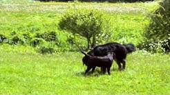 KOPK - Toiseen koiraan tutustuminen