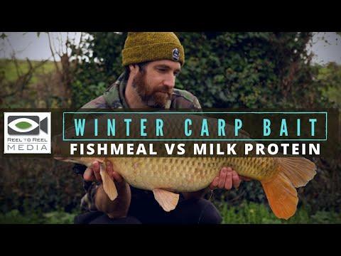 Winter Carp Fishing ~ Best Winter Carp Bait (fishmeals vs milk protein)