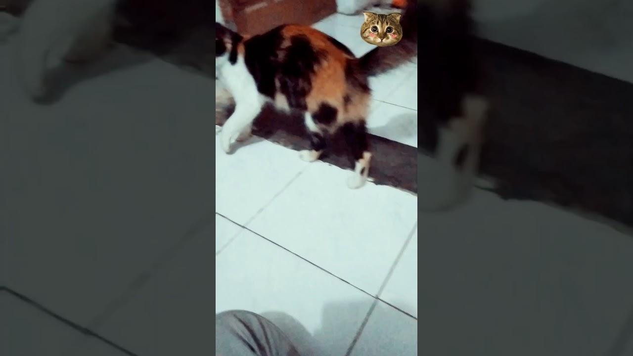 KUCING LUCU!!! Duel ibu & anak 😂😂😂 - YouTube