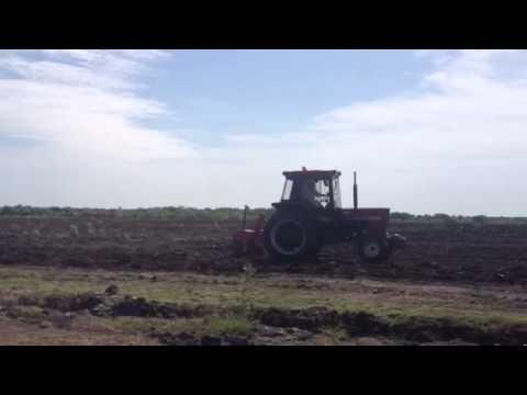 Green Crop Farming Ghana - doing chia farming in Ghana