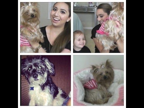 Meet My Pet Tag!🐾
