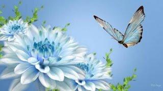 Virgo 2015 Mid Spring LOVE Pyschic Tarot Reading By SimplyLove