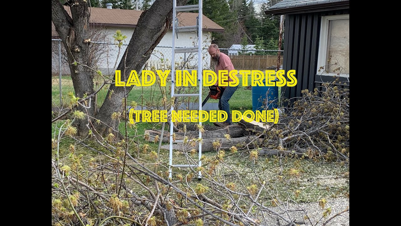 Lady in Destress (tree needed done)