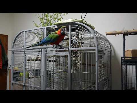 Klatka Dla Dużych Papug. Tak Mieszka Papuga Ara Lucy.