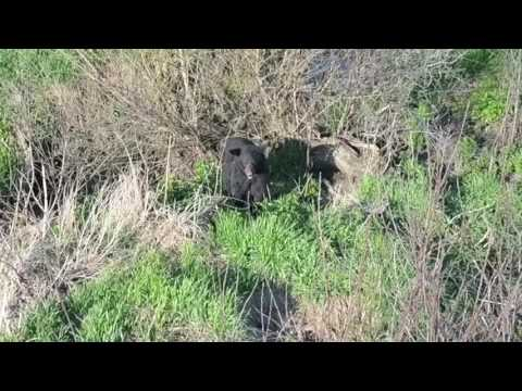 Drone Happens Upon Black Bear