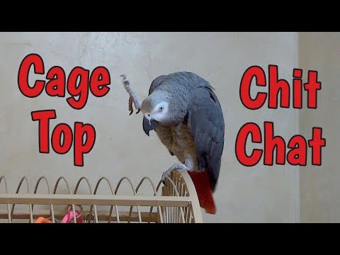 Einstein Parrot's Cage Top Chit Chat