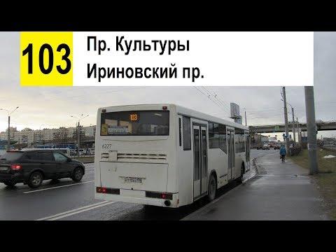 """Автобус 103 """"Ириновский пр. - пр. Культуры"""""""
